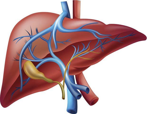 USG wątroby jest częścią składową badania jamy brzusznej, które dotyczy także pęcherzyka żółciowego i dróg żółciowych.