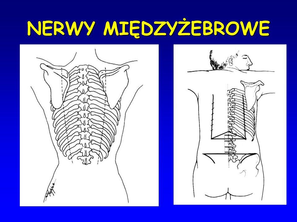 Nerwoból międzyżebrowy inaczej neuralgia jest to przypadłość bólowa, umiejscowiona w okolicy unerwienia przez określone nerwy obwodowe