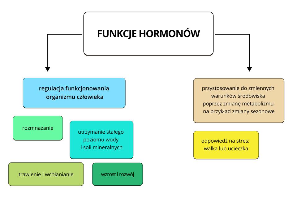 zmiany hormonalne zwiazane z wiekiem  łączą się z nadmiarem lub brakiem hormonów, z tego powodu wyróżnia się nadczynność lub niedoczynność.